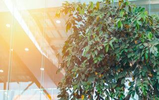 κτίριο με πράσινο δέντρο που υποδηλώνει την εξοικονόμηση ενέργειας